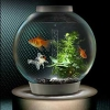 ฮวงจุ้ยกับตู้ปลา