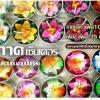 เทียนหอมดอกไม้สวยงาม แพคเกทเชอร์ไพร้ กลิ่นหอม งานปั้นทำมือ สั่งซื้อแพคเดียวก็จัดส่งค่ะ สินค้านี้สั่งซื้อได้ที่ไลน์ @scd0683n เท่านั้นค่ะ