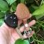 ซองหนังแท้ ใส่กุญแจรีโมทรถยนต์ Toyota Altis,Hilux Vigo,Fortuner,Camry,Innova thumbnail 9