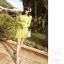 ชุดเดรสสั้นสีเขียว ลายนกน่ารักสดใส คอวี แขนยาว เอวเข้ารูป thumbnail 4