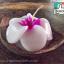 ขายเทียนหอมช่อดอกในกะลาเรือ เทียนหอมดอกไม้ เทียนลีลาวดี เทียนกุหลาบ เทียนออคิด ดอกไม้เทียนหอมอโรมา Aroma-candle ขั้นต่ำ12ชิ้น thumbnail 1