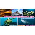 ดำน้ำ เกาะเต่า sailrock ชุมพร ระหว่างวันที่ 11-14 สค 60