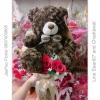 ช่อดอกไม้ ตุ๊กตาหมี