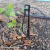 สอบถามเรื่องมะละกอกับสวนสมหวังครับ..มีใครเคยปลูกมะละกอซ้ำที่เดิมและมีปัญหาอะไรบ้างครับ?