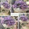 ช่อดอกไม้แสดงความยินดี ดอกสแตติส