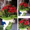 ช่อดอกกุหลาบสีแดง ดอกไม้วาเลนไทน์