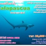 ช่วงสงกรานต์ 12-16 เมษา 59 ทริป Malapascua มีทั้งตัวใหญ่ และ ตัวเล็ก macro ครบคะ