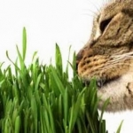 ของเล่นแมว และหญ้าสำหรับสัตว์เลี้ยง