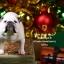 Mr.Z MRZ021 British Bulldog 4.0 Statues thumbnail 62