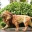 JxK.Studio JxK002 1/6 African Lion figure thumbnail 31