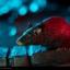 Killer Croc - Premium Format™ Figure by Sideshow Collectibles thumbnail 9