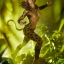 Cheetah - Premium Format™ Figure by Sideshow Collectibles thumbnail 20