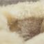 [พร้อมส่ง] รองเท้าขนสัตว์ รองเท้าบูทสั้น แบบร้อยเชือก แฟชั่นหนังpu สีครีม กำมะหยี่ด้านใน ทรงสวย แฟชั่นหน้าหนาว thumbnail 3