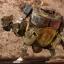 ThreeA WWRp Bramble Mk2 Euro Defence Olivier thumbnail 3