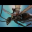 MMSC003 ANT-MAN - ANT-MAN ON FLYING ANT thumbnail 2