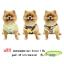 เสื้อสุนัข-แมว เสือยืดแฟชั่น #02 Size : XL แพค 3 ชิ้น ฟรีปลอกคอสุนัข-แมว (คละลาย)
