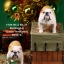 Mr.Z MRZ021 British Bulldog 4.0 Statues thumbnail 23