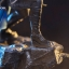 Iron Studios - Valkyrie BDS Art Scale 1/10 Thor Ragnarok thumbnail 13