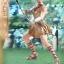 01/07/2017 Hot Toys MMS424 WONDER WOMAN - WONDER WOMAN (TRAINING ARMOR VERSION) thumbnail 16