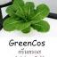 กรีนคอส Green Cos thumbnail 1