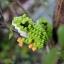Tree Frog thumbnail 1
