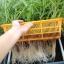 ชุดปลูกผักไฮโดรระบบ DFT ชุดทดลองปลูก (ระบบน้ำนิ่ง) -- ฟรีค่าส่ง ปณ-ธรรมดา thumbnail 2