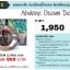 Abalone Beauty Cream ครีมหน้าเรียว (50 g) thumbnail 8