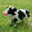 Cow thumbnail 1