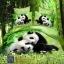 (Pre-order) ชุดผ้าปูที่นอน ปลอกหมอน ปลอกผ้าห่ม ผ้าคลุมเตียง ผ้าฝ้ายพิมพ์ 3D รูปหมีแพนด้า thumbnail 1