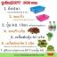 ชุดปลูกผักไฮโดรระบบ DFT ชุดใหญ่ (ระบบน้ำนิ่ง) **ฟรีค่าส่ง ปณ.ธรรมดา** thumbnail 1