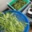 ชุดปลูกผักไฮโดรระบบ DFT ชุดทดลองปลูก (ระบบน้ำนิ่ง) -- ฟรีค่าส่ง ปณ-ธรรมดา thumbnail 8