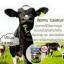 Super Colostrum Milk 5000 igG ค่าความสูง igF 90 ug สูงสุด thumbnail 4