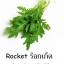 ชุดปลูกผักไฮโดรระบบ DFT ชุดใหญ่ (ระบบน้ำนิ่ง) **ฟรีค่าส่ง ปณ.ธรรมดา** thumbnail 9