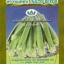 กระเจี๊ยบเขียว นิ้วนาง125 thumbnail 1