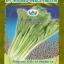 ผักกาดกวางตุ้ง ปักกิ่ง12 thumbnail 1