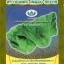ผักกาดเขียว มณีจันทร์121 (เขียวปลี) thumbnail 1