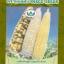 ข้าวโพด อาร์ยู105 (เทียนเหลือง) thumbnail 1