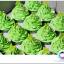 คัพเค้กธีมสีเขียว thumbnail 2
