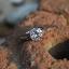 แหวนประดับเพชรฝังหนามเตย หุ้มทองคำขาวแท้ thumbnail 2