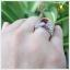 แหวนโกเมนแท้ ฉลุลายอย่างสวยงาม ใส่เสริมอำนาจบารมี thumbnail 5