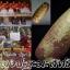 ยาแดงปะถะมะสิทธิ โดย ครูบาชัยมงคล thumbnail 1