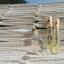 น้ำหอม Kanlaya 10 ml. Starter Set ขายส่ง 48 ขวด thumbnail 4