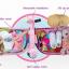 กระเป๋าเดินทางขับขี่ได้สำหรับเด็ก Skoot Children's Ride-On Suitcase (Hot Pink) thumbnail 9