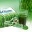 เครื่องดื่มผงจากใบอ่อนข้าวสาลี (Vegi Vera เวกิ-เวร่า) thumbnail 2