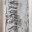 หนังสือเกี่ยวกับญี่ปุ่น4เล่ม1)ความพินาศของโตเกียว 2) จดหมายจากเกียวโต 3) เกียวโต ไดอารี่ 4)ไอ้หนูซามูไร วิถีแห่งดาบ thumbnail 9