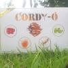 ผลิตภัณฑ์เสริมอาหาร Cordy-O จากถั่งเช่าแท้ เห็ดหลินจือ โสมเกาหลี และ ใบแปะก๊วย