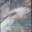 การเพาะเลี้ยงปลาสวาย thumbnail 1