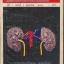 วารสารสุขภาพ ปีที่ 4 ฉบับที่ 9 พ.ศ.2519 thumbnail 1