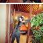 พร้อมส่ง กระเป๋าถือ แบรนด์ Maomao รุ่น M16127 (สีดำ สีส้ม สีฟ้า สีแดง) thumbnail 9