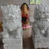 สิงโตปักกิ่งหินอ่อนแกะสลัก ขนาด สูง 100 กว้าง 40 ยาว 65 เซนติเมตร